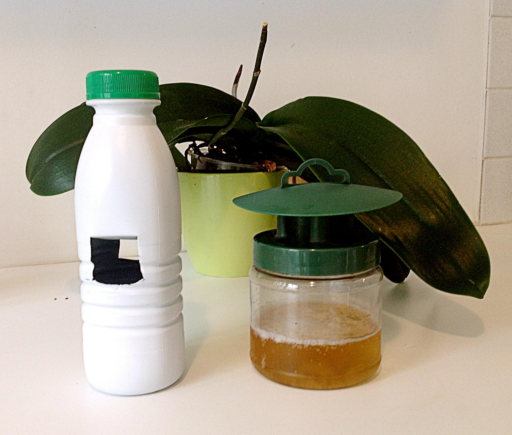 La chasse au lima on jardissimo - Pieges a limaces fait maison a base de biere ...