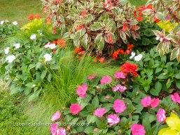 20120807 - Creuse - Guéret - tapis floral 2