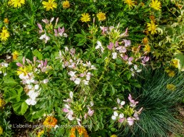 20120807 - Creuse - Guéret - tapis floral