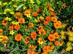 20120810 - Cher - Aubigny - tapis floral