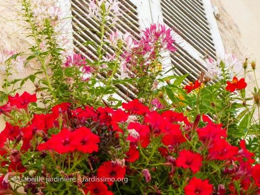 20120803 - Yonne - Clamecy - bac fleuri 2