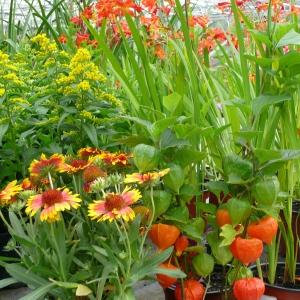 Bac d'automne jaune et orange