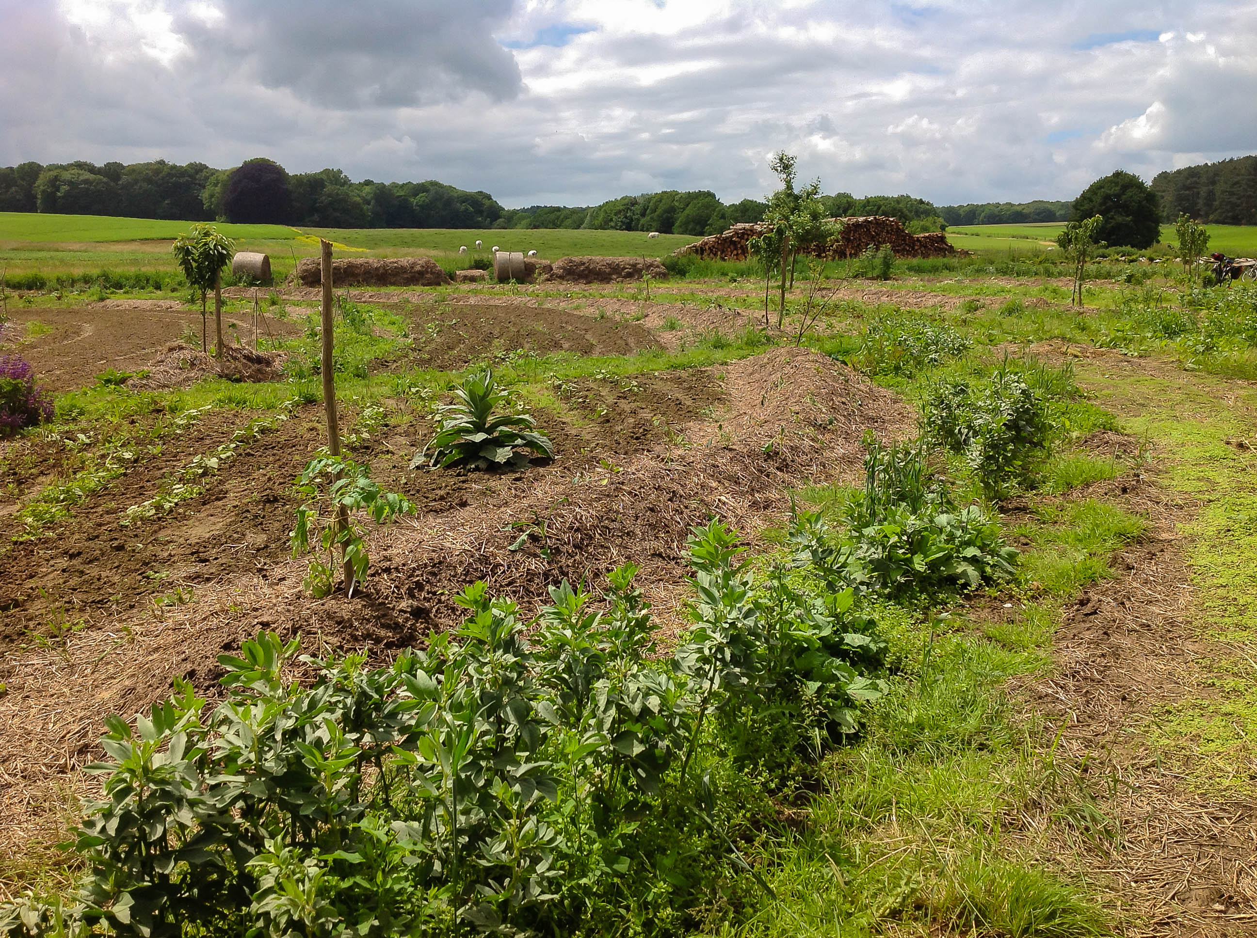 Permaculture une id e qui fait son chemin jardissimo for Creer une butte permaculture