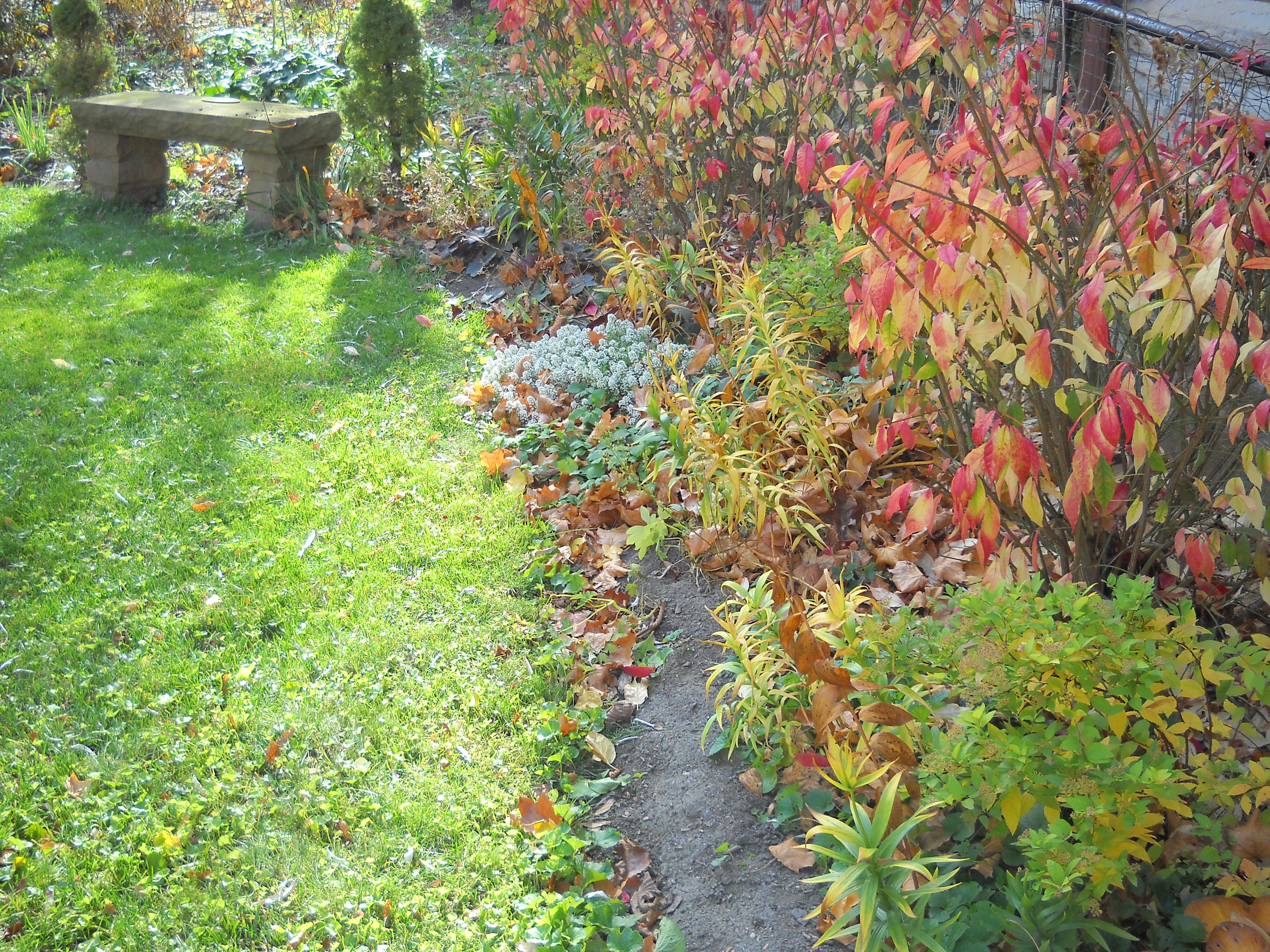Novembre au jardin jardissimo - Jardin novembre ...