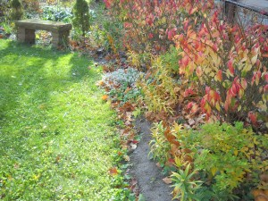 Novembre au jardin