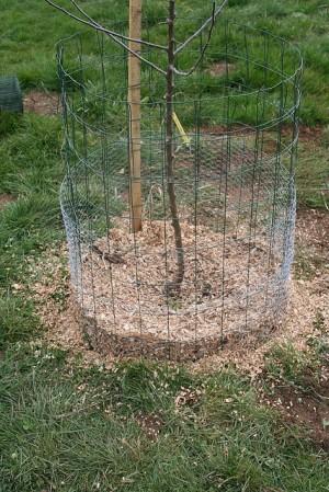 Plantation d'un arbre fruitier