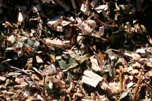 BRF de tilleul frais (Source photo : arpent nourricier sur Flickr)