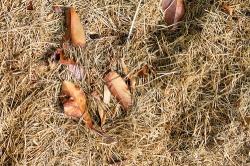 Paillis d'herbe sèche