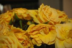 Bouquet de roses qui flétrissent