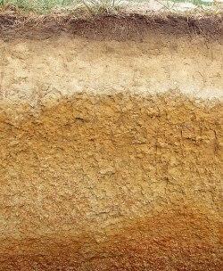 Les horizons d'un sol : la couche supérieure foncée concentre l'humus.